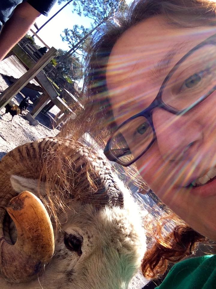 Weirdo taking a selfie with a sheep