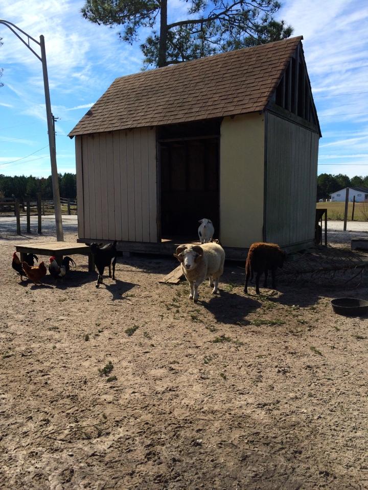 On CJ Acres Animal Rescue Farm!